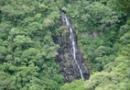 Conselho do PPI aprova condições à privatização de duas florestas nacionais