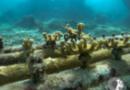 """Usando """"berços"""" criados em impressora 3D, biofábrica recupera corais em PE"""
