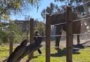 EUA: Pai invade recinto de elefante com filha no colo para tirar foto; veja