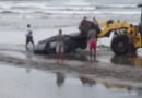 Morador desrespeita decreto e atola carro em praia do litoral de SP